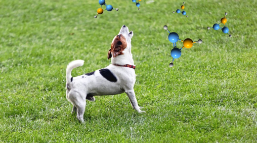 A typical small dog barking at air molecules.